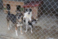 Od stycznia adoptujący psy ze schroniska zwolnieni z opłaty od posiadania psów