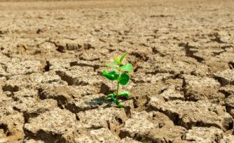 Pomoc suszowa dla utrzymujących stawy hodowlane - ruszył nabór wniosków
