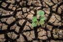 ARMIR - trwa nabór wniosków o wsparcie dla rolników poszkodowanych przez COVID-19 i ubiegłoroczną suszę