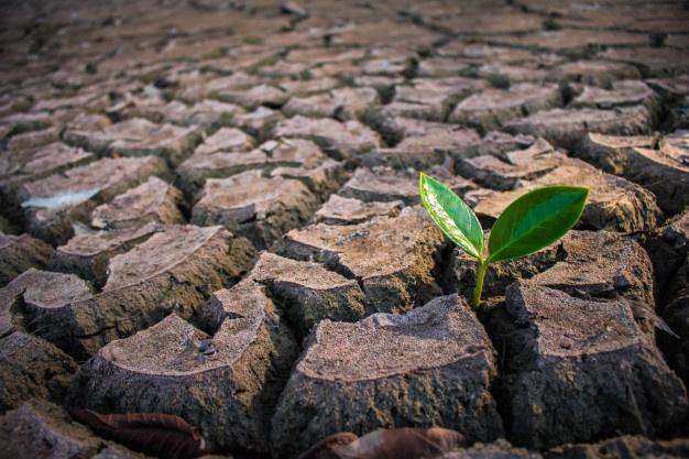 Pomoc krajowa dla producentów rolnych - kontynuacja pomocy suszowej
