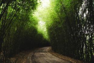 Dofinansowanie do prywatnych lasów