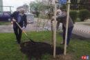 30 zasadzonych drzewek na 30-lecie MIGu...