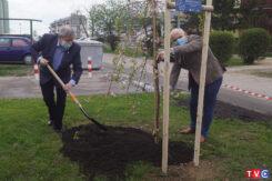 30 zasadzonych drzewek na 30-lecie MIGu [FOTORELACJA]