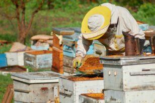 Ruszyła pomoc dla pszczelarzy